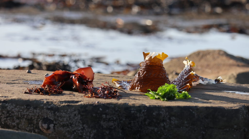 Vitamins in Seaweeds